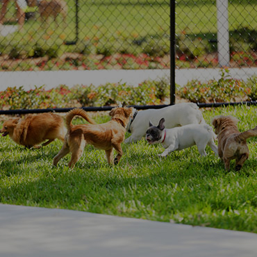 Large Dog Park at Highland East Apartments
